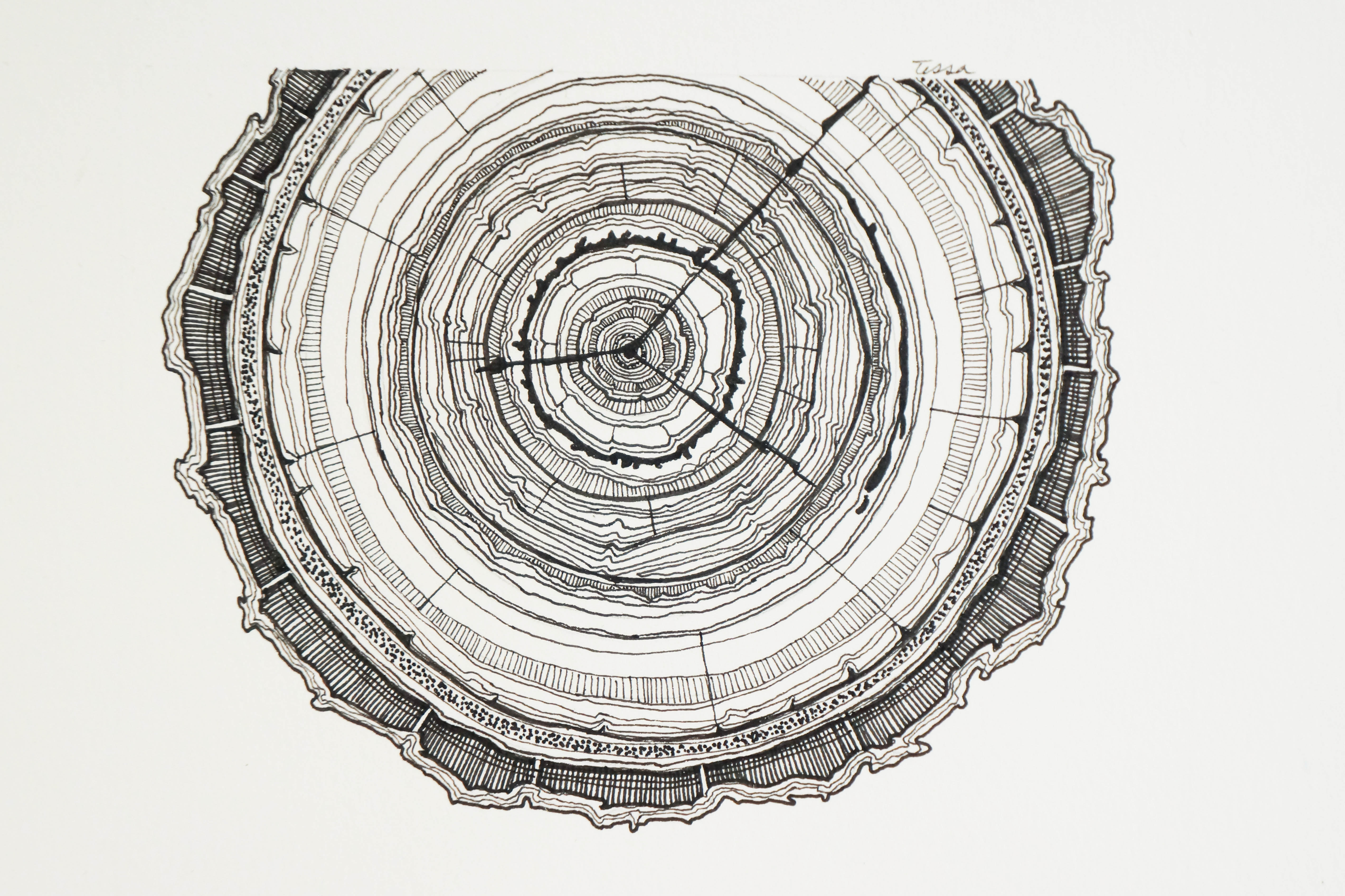 how to draw tree rings